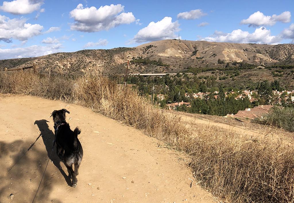 7 Best Dog-Friendly Trails in Orange County – RULE THE BREAKS