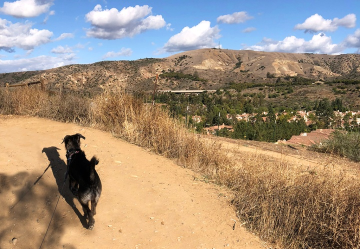 7 Best Dog-Friendly Trails in Orange County